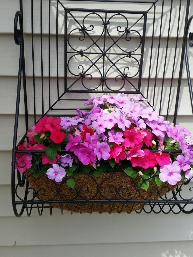 flowers 2015 4