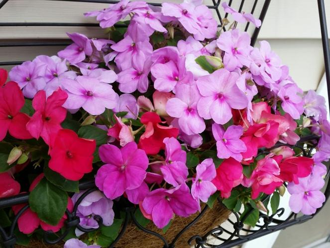 flowers 2015 5